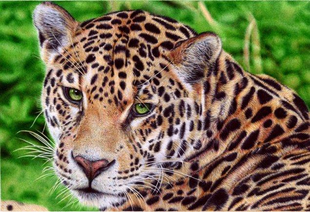 jaguar___ballpoint_pen_by_vianaarts-d51wc8w