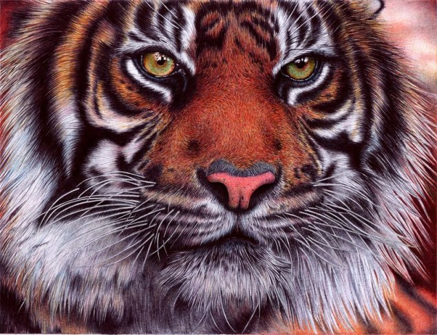 tiger___bic_ballpoint_pen_by_vianaarts-d4qz8xg